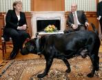 Internationalization: Putin's Dog